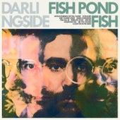 Fish Pond Fish von Darlingside