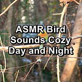 ASMR Bird Sounds Cozy Day and Night by S.P.A