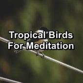 Tropical Birds For Meditation von Yoga
