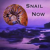 Snail Now by Snail
