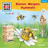 30: Bienen, Wespen, Hummeln von Was Ist Was Junior