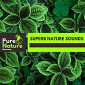 Superb Nature Sounds by Nature Field Recordings