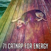 71 Catnap for Energy de Baby Sleep Sleep