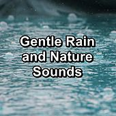 Gentle Rain and Nature Sounds by Relaxation and Dreams Spa