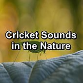 Cricket Sounds in the Nature by The Crickets