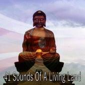41 Sounds of a Living Land by Meditation Spa