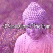 40 Simulation of the Brain de Massage Tribe