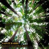 Rainforest by Sainte Barbe