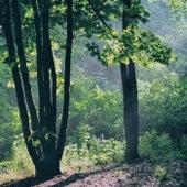 Lite Relaxing Ambiance | Just Relax, Natural Remedies, Chakra Cleansing de Zen Music Garden