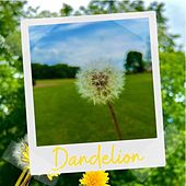 DANDELION by The Yellow