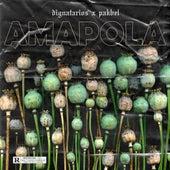 Amapola by Pakbel