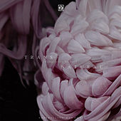 Transnatural Compilation Series I by Various Artists
