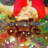 77 Growing Weary von Rockabye Lullaby