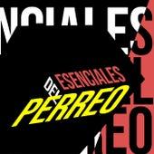 Esenciales del Perreo by Various Artists