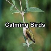 Calming Birds by Bird Sound Collectors