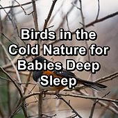 Birds in the Cold Nature for Babies Deep Sleep by Spa Relax Music