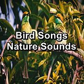 Bird Songs Nature Sounds von Yoga