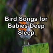 Bird Songs for Babies Deep Sleep by Sleep Music (1)