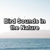 Bird Sounds in the Nature di Yoga Music