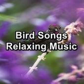 Bird Songs Relaxing Music di Yoga Music