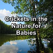 Crickets in the Nature for Babies by The Crickets