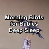 Morning Birds for Babies Deep Sleep de Musica Relajante