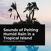 Sounds of Pelting Humid Rain on a Tropical Island by Rain Sounds Nature Collection