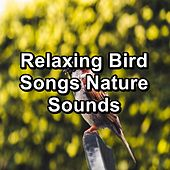 Relaxing Bird Songs Nature Sounds by Musica Relajante