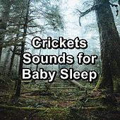Crickets Sounds for Baby Sleep by Nature Ambience