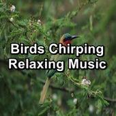 Birds Chirping  Relaxing Music by Calm Bird Sounds