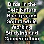 Birds in the Cold Nature Background Sound while Working Studying and Concentration de Nature Sounds (1)