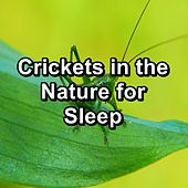Crickets in the Nature for Sleep by The Crickets