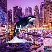 W.H.A.L.E di Dane