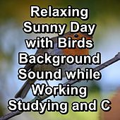 Relaxing Sunny Day with Birds Background Sound while Working Studying and Concentration von Yoga
