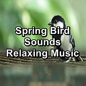 Spring Bird Sounds Relaxing Music by Spa Music (1)