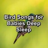 Bird Songs for Babies Deep Sleep de Meditation Spa
