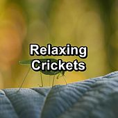Relaxing Crickets by The Crickets