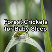 Forest Crickets for Baby Sleep by Musica Relajante