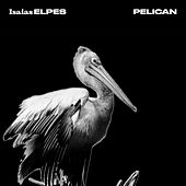 Pelican by Isaias Elpes