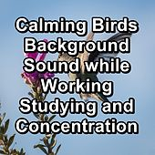 Calming Birds Background Sound while Working Studying and Concentration de Animal and Bird Songs (1)
