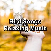 Bird Songs Relaxing Music by S.P.A
