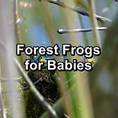 Forest Frogs for Babies by Nature Sound Series