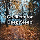Crickets for Deep Sleep de Nature Ambience