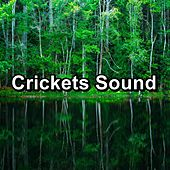 Crickets Sound by The Crickets