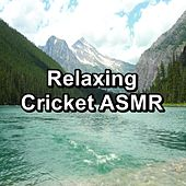 Relaxing Cricket ASMR by Relaxing Music Therapy