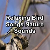 Relaxing Bird Songs Nature Sounds de Sleep Music (1)