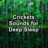 Crickets Sounds for Deep Sleep by Crickets - Tinnitus Sleep Solution