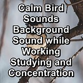 Calm Bird Sounds Background Sound while Working Studying and Concentration by Spa Music (1)