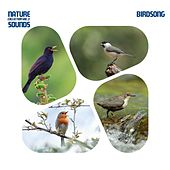 Nature Sounds Collection, Vol. 3: Birdsong by Various Artists