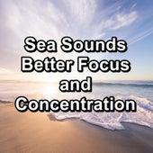 Sea Sounds Better Focus and Concentration de Rain Sounds (2)